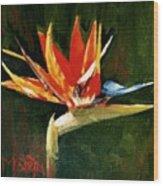 Orange Bird Of Paradise Wood Print