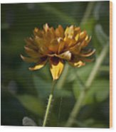 Orange Blanket Flower Wood Print