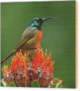 Orange-breasted Sunbird On Protea Blossom Wood Print