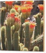 Orange Cactus Blooms Wood Print