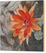 Orange Cactus Flower II Wood Print