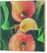 Orange Calla Lily Wood Print
