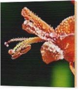 Orange Cape Honeysuckle Bush Blossom Wood Print