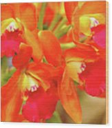 Orange Cattleya Orchid Wood Print