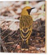 Orange Chat 4188 Wood Print