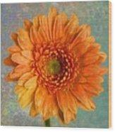 Orange Color Stroke Gerber Daisy Wood Print