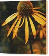 Orange Coneflower Wood Print