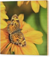 Orange Crescent Butterfly Wood Print
