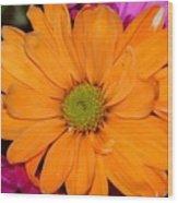 Orange Crush Daisy Wood Print