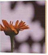 Orange Daisey Wood Print