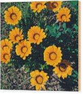 Orange Daisies--film Image Wood Print