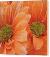 Orange Daisies Paired Wood Print