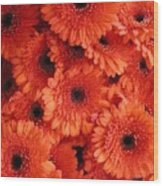 Orange Daisies Wood Print