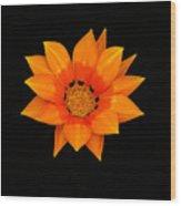 Orange Daisy Wood Print