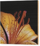 Orange Day Lilly On Black Wood Print