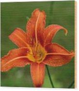 Orange Day Lily No.2 Wood Print