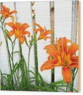 Orange Daylily At Colonial Williamsburg Wood Print