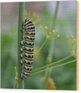 Orange Dot Caterpillar Wood Print