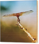 Orange Dragonfly Wings I Wood Print