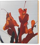 Orange Drama Wood Print