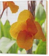 Orange Field Wood Print