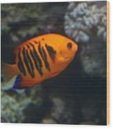 Orange Fish Wood Print
