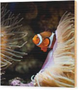 Orange Fish In Sea Anemones Wood Print