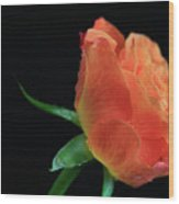 Orange Flame Rose Wood Print by Tracy Hall