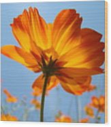 Orange Floral Summer Flower Art Print Daisy Type Blue Sky Baslee Troutman Wood Print