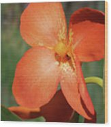 Orange Flower 1 Wood Print