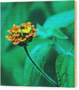 Orange Flower II Wood Print