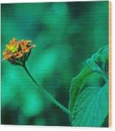 Orange Flower IIi Wood Print