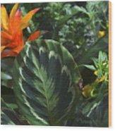 Orange Flower Longwood Gardens Wood Print
