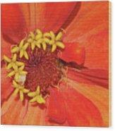 Orange Flower Macro Wood Print