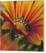 Orange Flower Print Wood Print