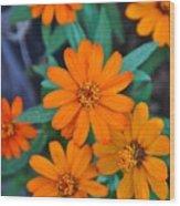 Orange Flowers Wood Print by Lori Kesten