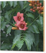 Orange Flowers On A Vine Wood Print