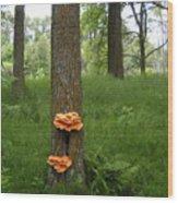 Orange Fungi On A Tree Wood Print