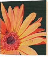Orange Gerbera On Black Right Side  Wood Print