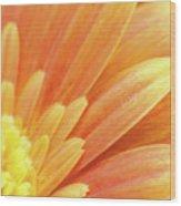 Orange Gerbera Petals Wood Print