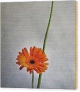 Orange Gernera Wood Print