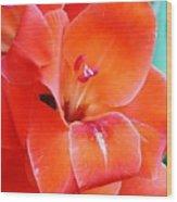 Orange Gladiola Wood Print