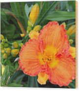 Orange Gladiola Flower And Buds Wood Print