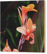 Orange Gladiolus Wood Print