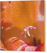 Orange Gladiolus Wood Print
