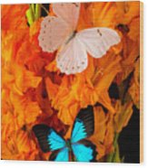 Orange Glads With Two Butterflies Wood Print