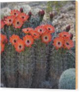 Orange Hedgehog Patch  Wood Print