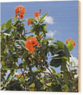 Orange Hibiscus With Fruit On The Indian River In Florida Wood Print