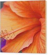 Orange Hybiscus Wood Print