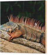 Orange Iguana Close Up Wood Print